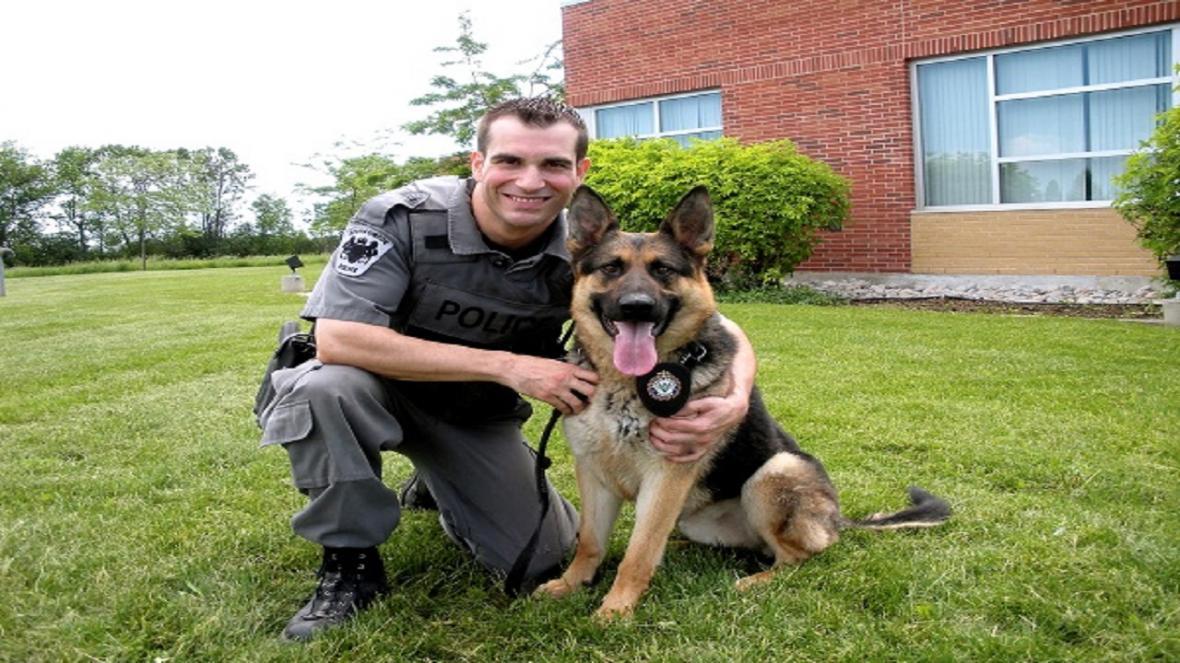 توانایی سگ ها برای تشخیص افراد مبتلا به ویروس کرونا