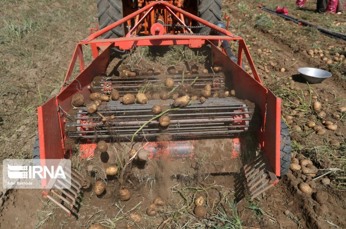 خبرنگاران سیب زمینی کاران اردبیل در برداشت محصول عجله نکنند