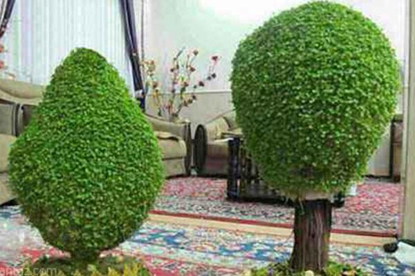 کاشت سبزه درختی برای عید