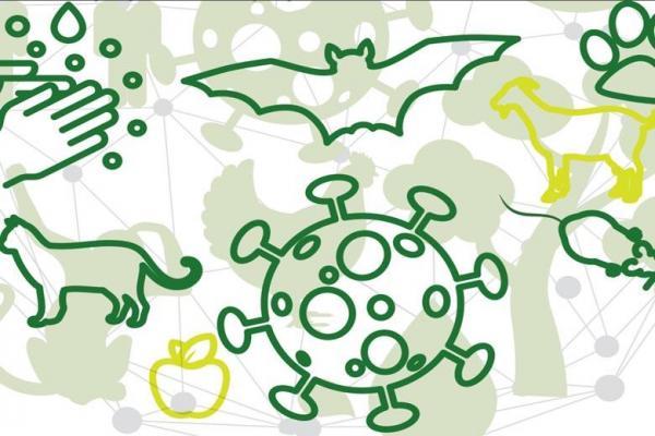 ویروس های حیوانی چگونه به انسان منتقل می شود؟