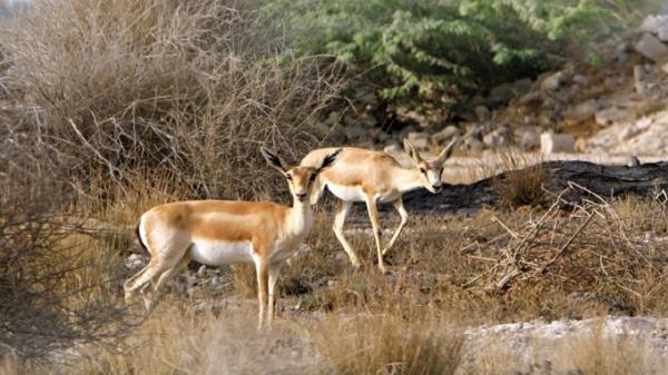 مجوز شکار و صید حیات وحش در استان تهران صادر نخواهد شد